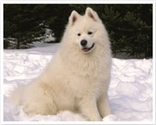 Top Winter Dog Breeds