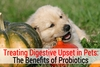 Treating Digestive Upset in Pets: The Benefits of Probiotics