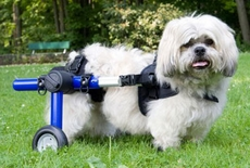 Walkin' Wheels for Handicapped Pets - Small