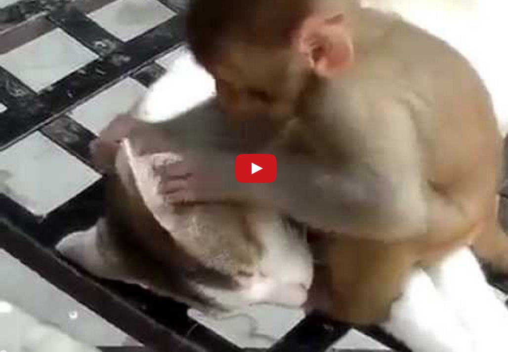 Watch This Adorable Baby Monkey Berate an Amazingly Patient Cat!!