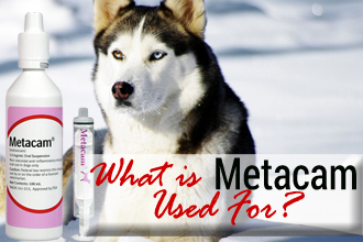 What is Metacam Used For?