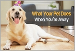 What Your Pet Does When You�re Away