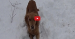 Where Does the Squeak Come From? This Dog Can't Figure It Out- But that Doesn't Stop Him From Having a Good Time!!