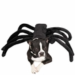 Zack & Zoey Grr-antula Costume - MEDIUM