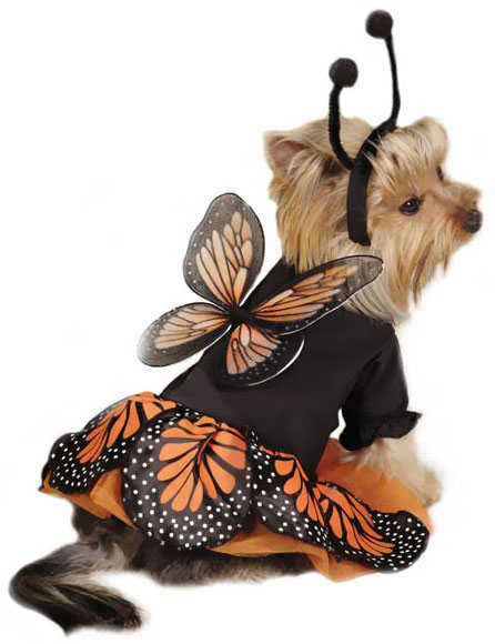 Zack & Zoey Monarch Butterfly Costume - X-SMALL