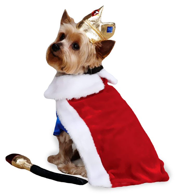 Zack & Zoey Royal Pup Halloween Costume - LARGE