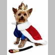Zack & Zoey Royal Pup Halloween Costume - XLARGE