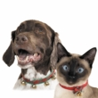 Zanies Jingle Bell Collars for CATS and DOGS