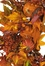 "28"" Harvest Wreath in Fall - Nearly Natural - 4648"