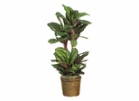 "45"" Maranta Silk Plant in Green - Nearly Natural - 6591-0308"