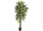 6' Bella Palm Silk Tree - Nearly Natural - 5312