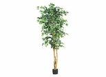 6' Ficus Silk Tree in Green - Nearly Natural - 5209