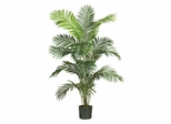 6' Paradise Palm in Green - Nearly Natural - 5260