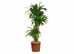 "62"" Dracena with Basket Silk Plant in Green - Nearly Natural - 6584-0508"
