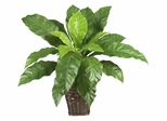 Birdsnest Fern with Wicker Basket in Green - Nearly Natural - 6530