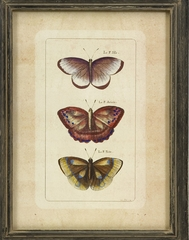 Butterfly Collection Wall Art (Set of 3) - IMAX - 27304-3