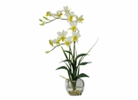 Dendrobium with Glass Vase Silk Flower Arrangement in Cream - Nearly Natural - 1135-CR