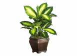 Golden Dieffenbachia with Wood Vase Silk Plant in Green - Nearly Natural - 6592-0507