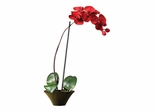 Holiday Phalaenopsis Orchid Arrangement - Nearly Natural - 4859