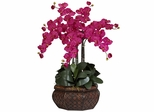 Large Phalaenopsis Silk Flower Arrangement - Nearly Natural - 1201-BU