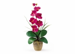 Phalaenopsis Silk Orchid Flower Arrangement in Beauty - Nearly Natural - 1016-BU