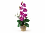 Phalaenopsis Silk Orchid Flower Arrangement in Orchid - Nearly Natural - 1016-OR