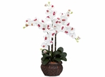 Phalaenopsis with Decorative Vase Silk Flower Arrangement - Nearly Natural - 1211-WH