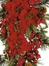 Poinsettia Teardrop in Red / Green - Nearly Natural - 4656
