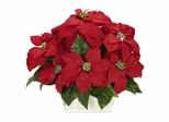 Poinsettia with White Wash Planter Silk Arrangement - Nearly Natural - 1262