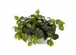 Pothos with White Wash Planter Silk Plant - Nearly Natural - 6713