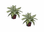 Silver Queen Silk Plant (Set of 2) - Nearly Natural - 6694-S2