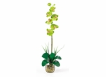 Single Phalaenopsis Liquid Illusion Silk Flower Arrangement in Green - Nearly Natural - 1104-GR