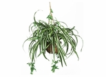 Spider Hanging Basket Silk Plant in Green - Nearly Natural - 6607