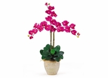 Triple Phalaenopsis Silk Orchid Flower Arrangement in Beauty - Nearly Natural - 1017-BU