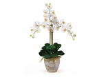 Triple Phalaenopsis Silk Orchid Flower Arrangement in Cream - Nearly Natural - 1017-CR