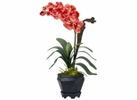 Vanda with Black Hexagon Vase Silk Arrangement - Nearly Natural - 1252-SL