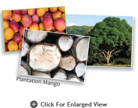 Enrico Mango Wood Collections