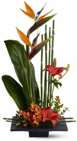 Exotic Birds of Paradise