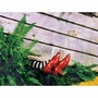 Wizard of Oz Wicked Witch of the East Canvas Wall Art
