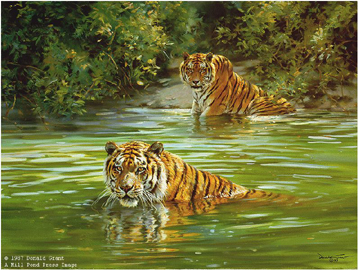 """Donald Grant Limited Edition Paper Print:""""Cool - Cats - Tigers"""""""