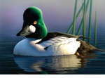 Federal Conservation Duck Stamps