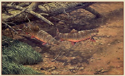 "Fred W.Thomas Handsigned & Numbered Limited Edition Print: ""Brush Pile Brookies"""