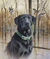 "Jim Killen Hand Signed & Number Limited Edition Artist Proof Print:""Great Retriver - Black Lab & Mallards"""