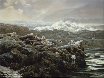 "John Seerey – Lester Limited Edition Print:""Coastal Clique-Harbor Seals"""