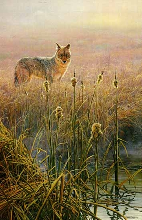 "John Seerey-Lester Limited Edition Print: ""Dawn on the Marsh - Coyote"""