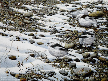"""John Seerey – Lester Limited Edition Print:""""Early Arrivals - Snow Buntings"""""""