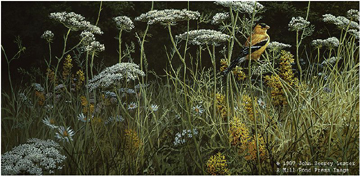 """John Seerey – Lester Limited Edition Print:""""Evening Meadow - American Goldfinch"""""""