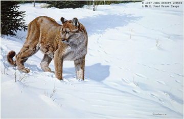 """John Seerey – Lester Limited Edition Print:""""First Tracks - Cougar"""""""