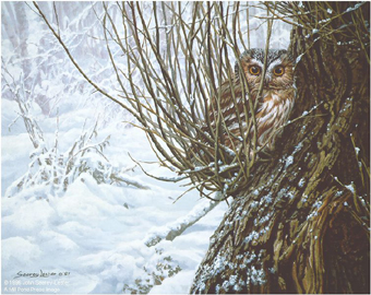 "John Seerey – Lester Limited Edition Print:""Hiding Place - Saw-Whet Owl"""
