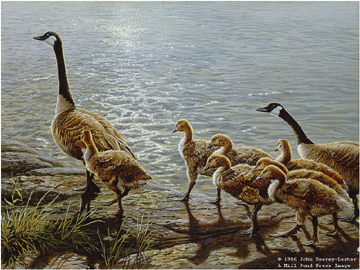 """John Seerey – Lester Limited Edition Print:""""Lakeside Family - Canada Geese"""""""